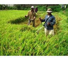 Máy gặt lúa mini gia đình
