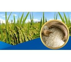 Thị trường lúa gạo
