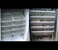 Máy ấp trứng 1000 trứng