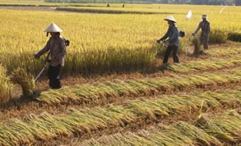 Máy gặt lúa cầm tay gia đình  BS431A-5