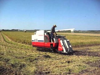 Máy gặt đập liên hợp Yanmar Ca485