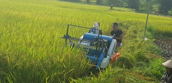 Máy gặt lúa mini liên hoàn KAMAST 4LZ-0.6 AB